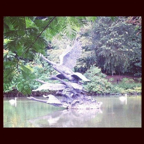 Swan lake (Taken with Instagram at Singapore Botanic Gardens)