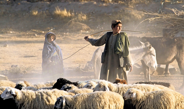 ghazalaa:  Brother and sister herding sheep in Afghanistan