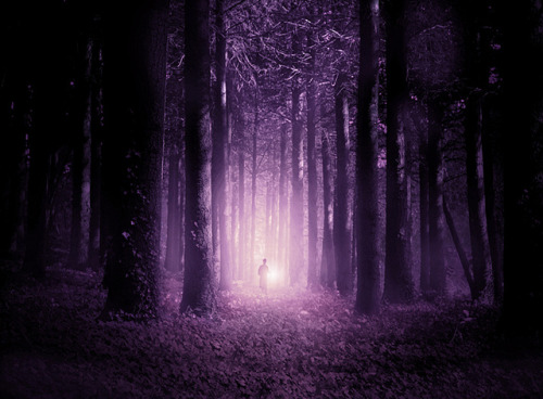 whispa:  The Watcher in the Woods by Marwane Pallas on Flickr.