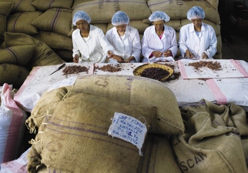 "Photo Issue 2011: Seventy percent of the world's cocoa comes from West Africa, but less than 1% of the world's chocolate is made there. Tim McCollum and Brett Beach founded Madécasse in 2008 to keep more economic benefit within the island nation. Beans travel by oxcart to Ambanja, where they are spot-checked for damage and appropriate dryness.""Most Innovative Companies: Madécasse""  (March 2011) Photo By: Livia Corona"