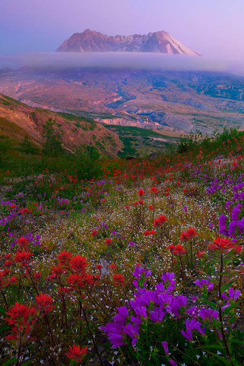 positivelynoteworthy:  Mount St Helens Wildflowers  (via Kevin McNeal)