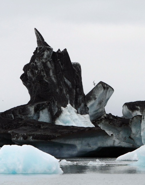overdosage:  Icebergs covered in ash from the Grimsvotn volcano eruption, Vatnajokull, Iceland