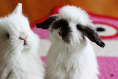 Why are bunnies on Tumblr so cute?