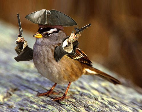 jack sparrow bird—the greatest winged pirate there ever was