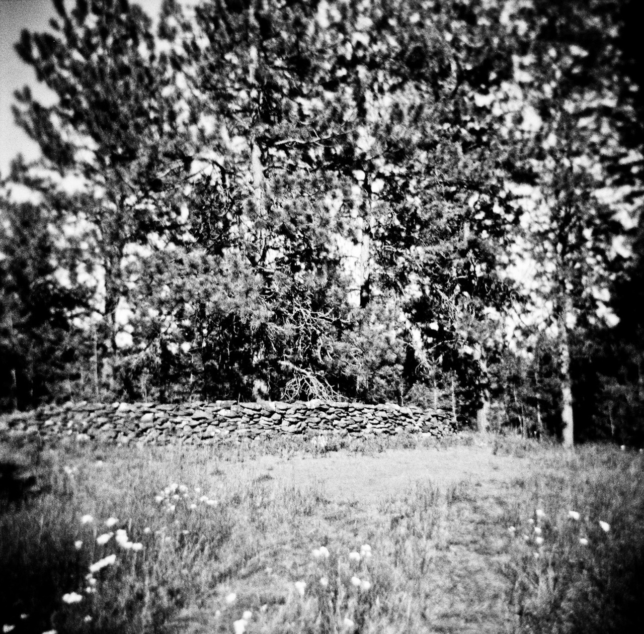 Rock Wall in Cheney WA  holga photo by tsparks