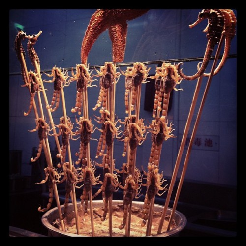dare to eat ? #scorpion #starfish #patrickstar #seahorse #skewers #Beijing #streetfood #foodporn #lovefoodhatewaste #china #Asia #instagood #igaddict #igers #instagramhub #iphone4 #iphoneography (Taken with instagram)