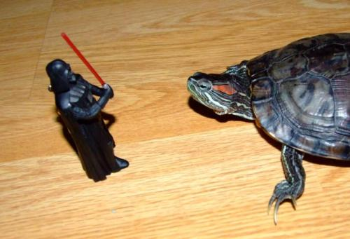 roguesworld:  My turtle will join the Dark Side  NO, DON'T DO IT. USE THE FORCE, LITTLE TURTLE! USE THE FORCE!Or just knock him over. He's an action figure, you know.