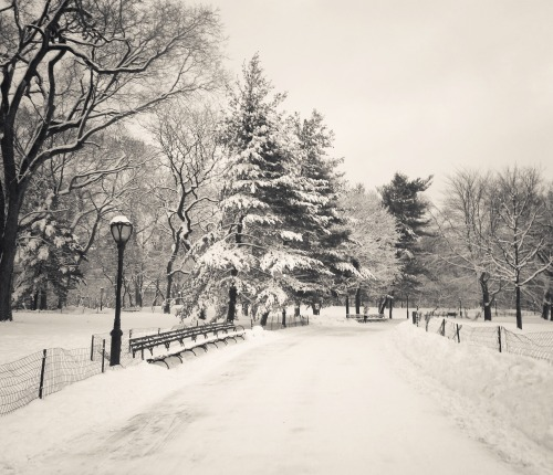 "Central Park winter trees covered with snow. New York City.  Winter crunches underfoot yielding to the heavy enormity of the sheer weight of souls in transition. Trees laden with snow frozen in thought stand dormant until the springtime.   It's on these sorts of days that the earth feels as if it is caught in a trance somewhere between dreaming and opening its frozen eyelids.  —-  An important note: I do apologize for not being around as much. I am going through a transitory stage of life right now. I just quite literally finished university this week after a fairly grueling final semester. It's been quite a journey as far as school is/was concerned. I am feeling rather burnt out mentally, emotionally and physically due to the whirlwind this (soon to be past) year was.  To recharge, I am taking some time to uncoil myself and let myself properly unwind in the month of January. I will still be posting but my posts will be very sparse. I don't really celebrate the New Year at this time of year since autumn feels like the proper beginning of the year to me personally but my birthday falls right after New Year's Day so it never fails to make me ponder all the temporal things regarding life. To those who do celebrate the New Year on January 1st, may you have a wonderful year ahead.   I don't really know how to thank everyone for their kind messages (my inbox has been overwhelmed with messages for the last few months and despite reading every single message I feel incredible guilt every time I view it), requests and love aside from saying that I really do  appreciate it all. So, thank you, from the bottom of my heart.   —-  View this photo larger and on black on my Google Plus page  —-  Buy ""In a trance - Central Park Winter Trees"" Posters and Prints here, View my store, email me, or ask for help."