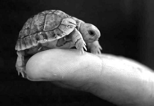 I'm a tiney tortle.  Pweese don't dwop me!