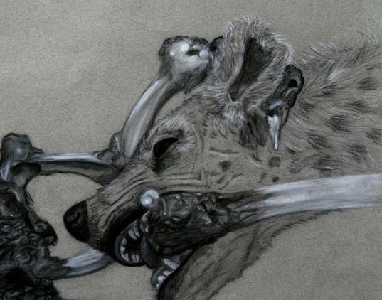 """Carcass"" Charcoal and Conte on Grey Paper Artist: Bree Mena"
