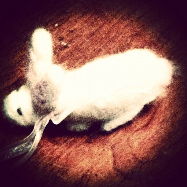 Pinky L White, felted bunny. #iphoto #iphone4s #iphonesia #ig #ighub #crafty #felt #felted #bunny #rabbit #cute #fuzzy #instafuzz  (Taken with instagram)