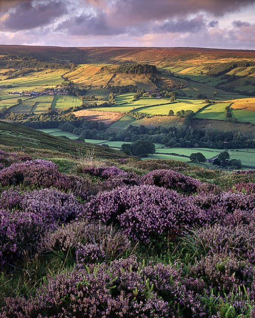 agoodthinghappened:  Rosedale 1 week later by Ross J Brown on Flickr.