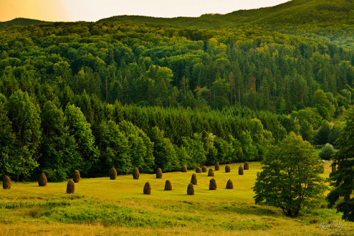 raoulpop:  Hay piles on hill slope on Flickr.