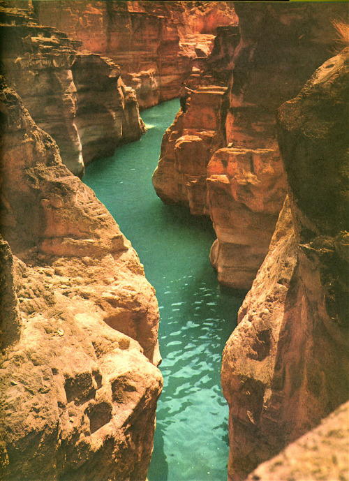 syndromed:  Havasu Creek, Grand Canyon