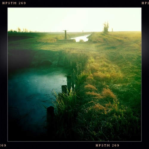 John S Lens, Pistil Film, No Flash, Taken with Hipstamatic