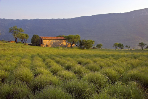 Provence countryside by Hulivili on Flickr.