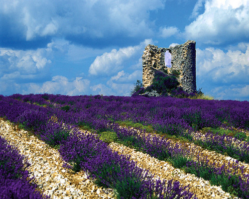 Windmill Ruins and Lavender by MesmanImages on Flickr.