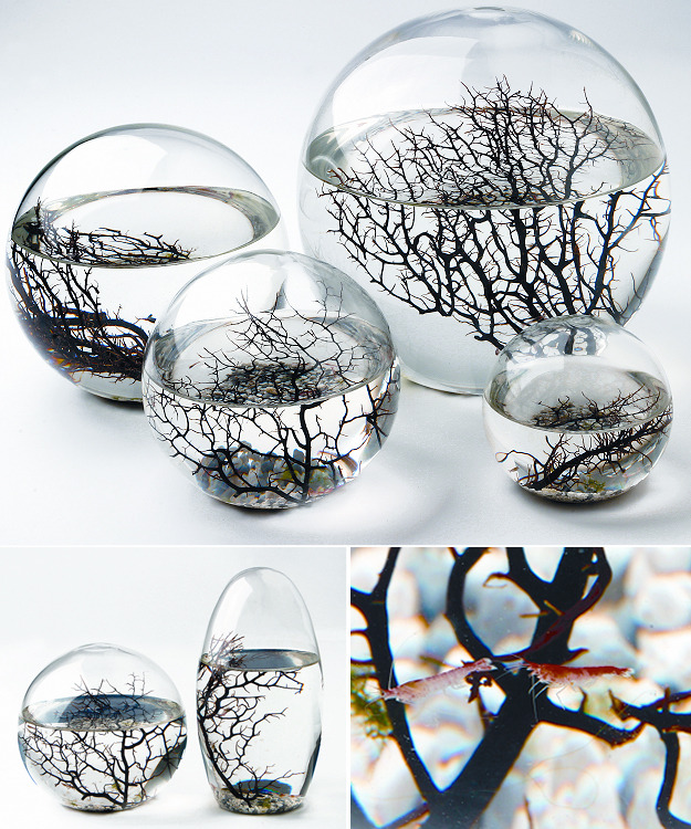 EcoSphere Aquatic Ecosystem.  The amazing EcoSphere is the original self contained aquatic ecosystem. Enclosed in glass, this miniature ecosystem is self sustaining with the perfect balance of animal and plant life. Sold at puremodern.