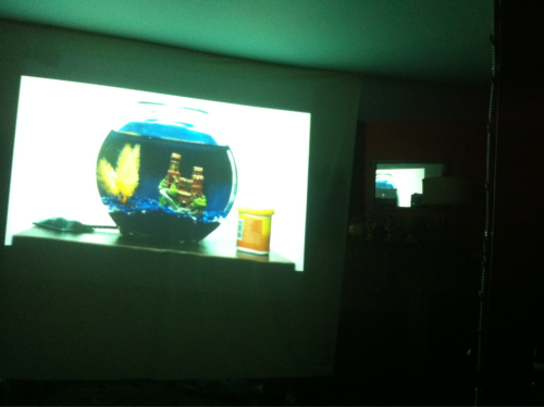 Snuck a shot during the film itself. Muffled moans, fish tank, and (happily) a chuckling audience.