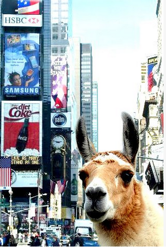 chellswawwiss:  me in New York. <3 garsh, i love my home.
