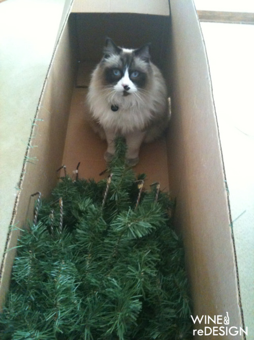 "Atom was upset that we ""killed"" the Christmas tree & put it back in storage."