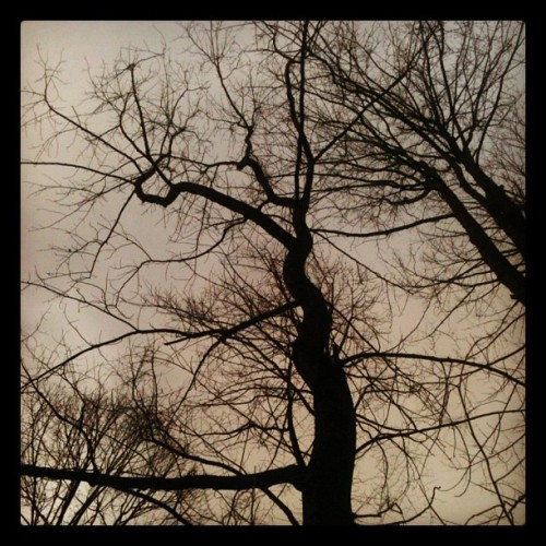 aumydawn:  I loved how this tree grew. :) #westvirginia #tree #trees #sky  (Taken with instagram)