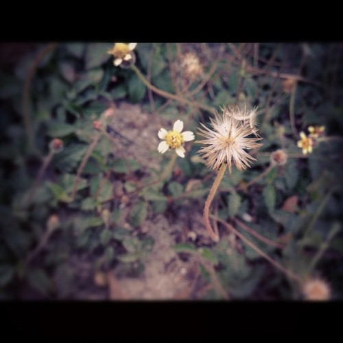 Even weeds can be beautiful.  (Taken with instagram)