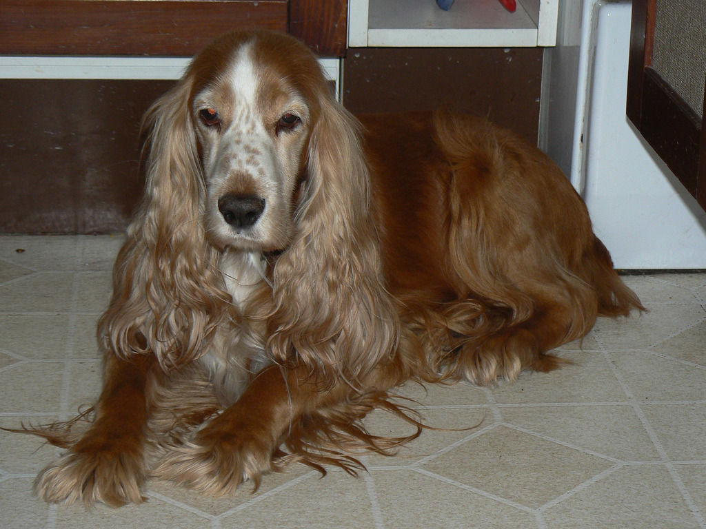 Albertine, Sofie's mother. We lost her on Dec 23 :(