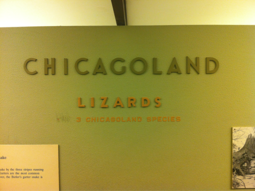 Chicagoland lizards.