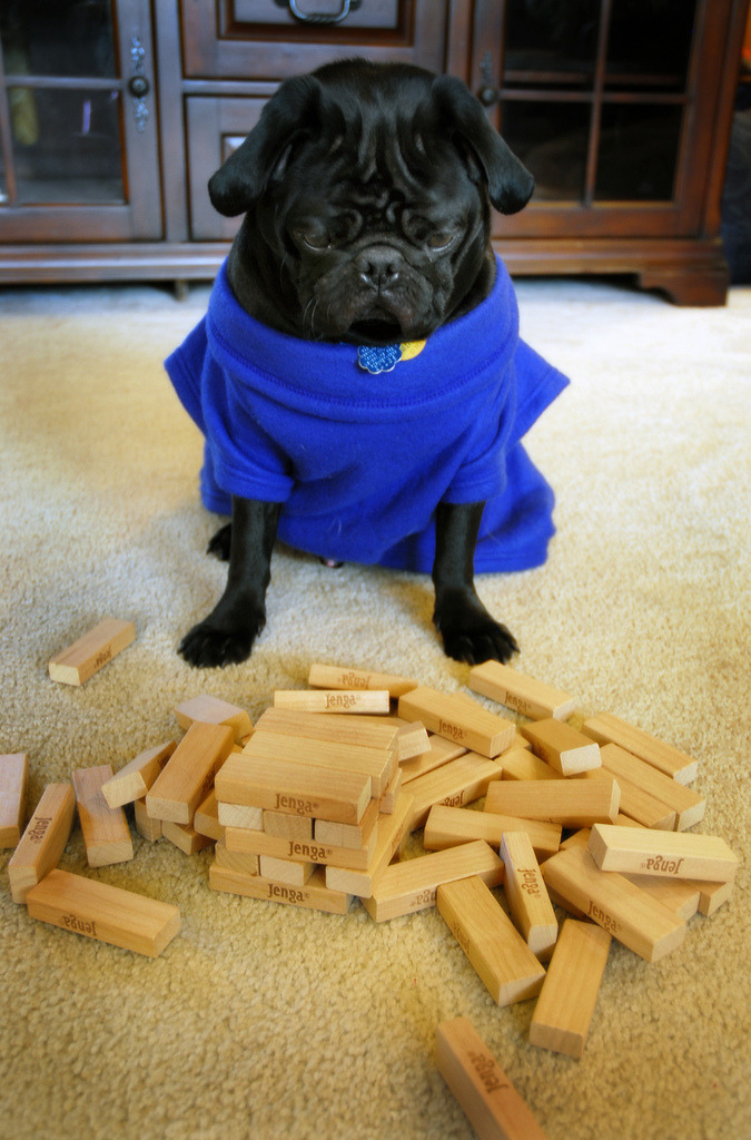 ihatebeingsingleseries:  A pug in a snuggie looking sad from losing jenga! This dog has I Hate Being Single written all over him!