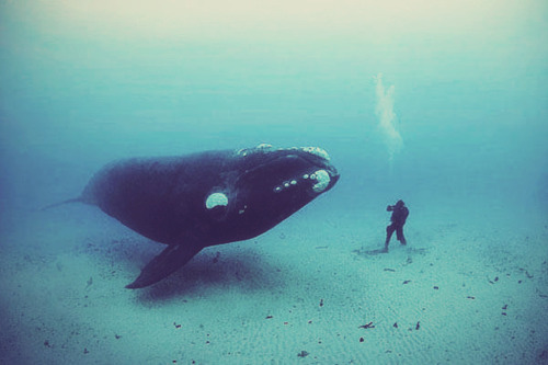 man playing with whale.
