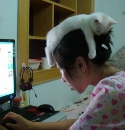 bickov:  Cat Hat  ************************************** Follow Feexy on Twitter & Facebook