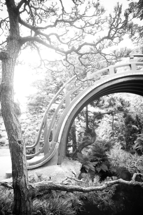 myleskatherine:  Japanese Tea Garden in San Francisco