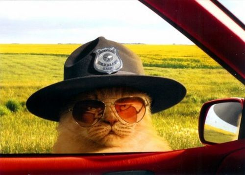 animalstalkinginallcaps:  ENGINE OFF. LICENSE AND REGISTRATION, PLEASE. SLOWLY. DO YOU KNOW HOW FAST YOU WERE GOING? DO YOU KNOW HOW MUCH PEYOTE YOU'RE ON? I'M GOING TO NEED YOU TO STEP OUT OF THE VEHICLE YOU THINK OF AS YOUR BODY AND MERGE WITH THE INFINITE.