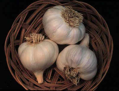 Breathe in. Breathe out. Allow the goodness of fresh garlic to find clarity in your passages. Garlic, is a magical food with other worldly properties to cool and relieve inner stress. At this point in life I add garlic to everything because it keeps me grounded and even tempered. For the ancient Romans Garlic was a symbol of the cosmos, ever unfolding.