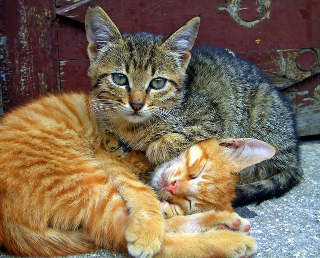 Two cats by Marite2007 on Flickr.