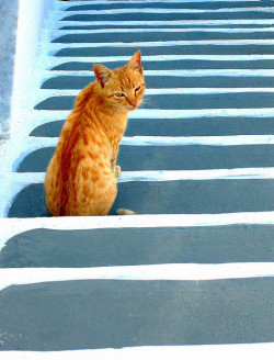 Cat on stairs by Marite2007 on Flickr.