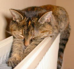 The Radiator Cat - Minnie Me by Nigel Jones on Flickr.