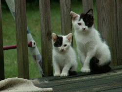 kittens 01 by fallenangelfish on Flickr.