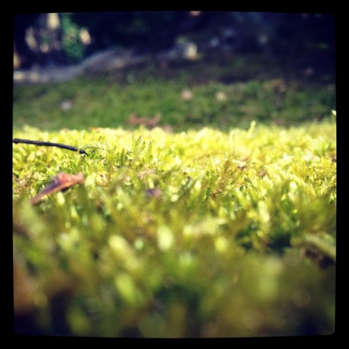 Mossy rocks   (Taken with instagram)