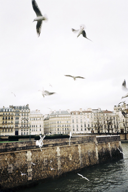 quentindebriey:  la seine. paris dec 2011