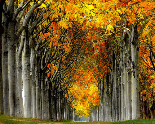 wasbella102:  some roads lead to nothing by larsvandegoor.com on Flickr. elemenop: