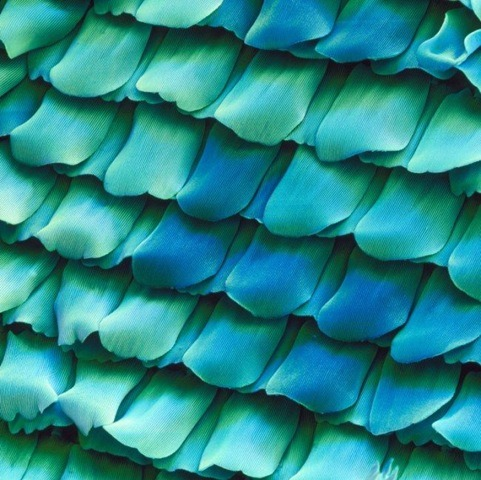 Microscopic view of a butterfly's wing.