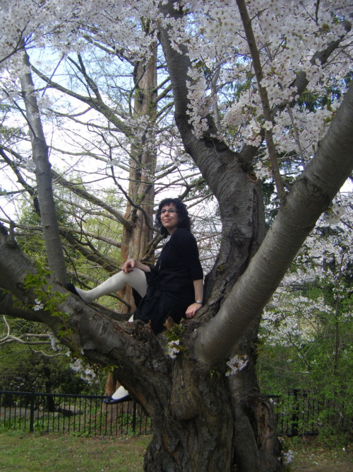 "Sugar_Skull sent this in with the comment ""Sitting in a cherry blossom tree."" This young lady is fearlessly flashing quite a bit of white stockinged leg.  Perhaps it was quite warm that day and she wanted a breeze downstairs.  This is why we endorse the inclusion of the cotton gusset in tights, friends.  She's looking pretty happy with herself in the circumstances. The breeze must be working its magic. She's not terribly high up that tree and it is daylight. Here's a question: why do people wear white tights? Am I the only person who puts on white and immediately attracts all the dirt in a 100m radius to my clothes?  Also, they're not all that flattering, especially when the rest of you is bedecked in black. This lady looks to have lovely slim legs and clearly doesn't care about dirt, so, good on her.  I salute you, white tights wearing person.   I want to find out WTF you think about white tights (aka am I alone here?): 3 out of 5 - A cool breeze on a white tights day"