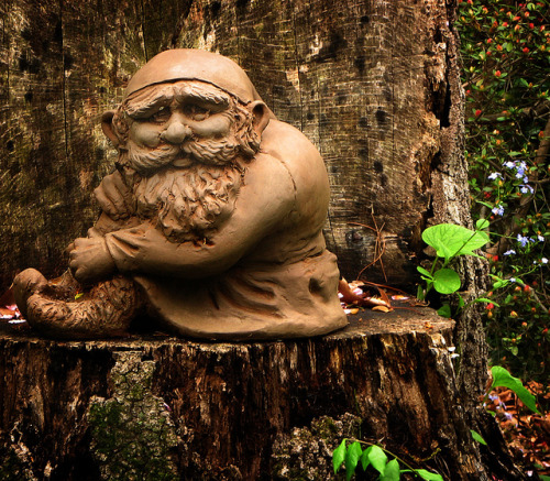 Gnome On A Stump by dcsaint on Flickr.