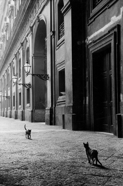 aquavelva:  Leonard Freed - Naples, Italy 1958