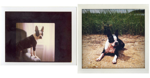 Instant Diptych- Left image: Polaroid 669 with the Land Camera 103, Right image: iPhone nonsense.