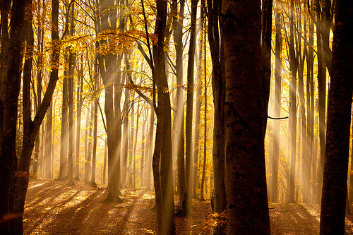 Nature #Photography : Yellow Sun beams in the forest