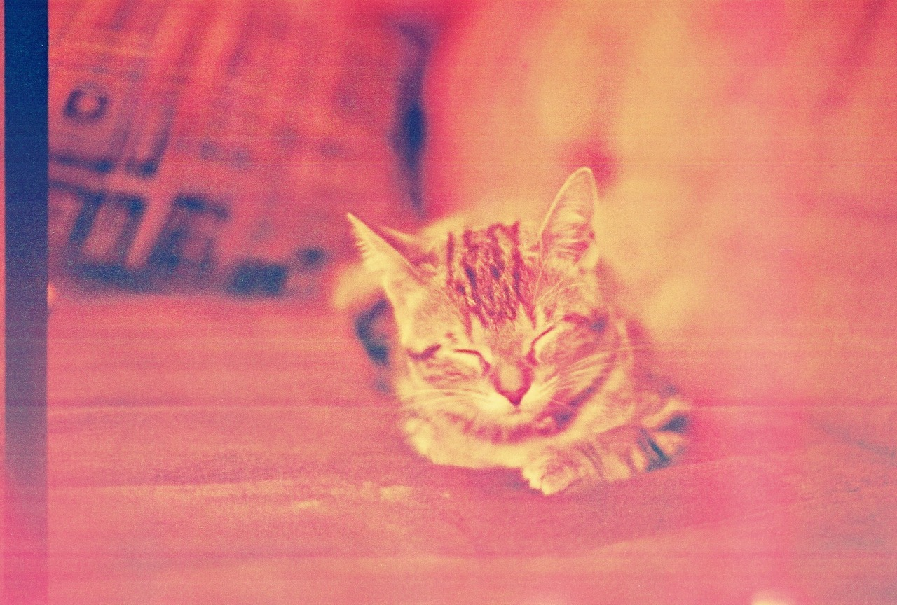 My baby kitteh… Picture taken by me with my Minolta.
