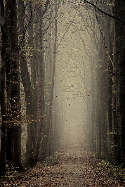 woodendreams:  (by Bart Ceuppens)